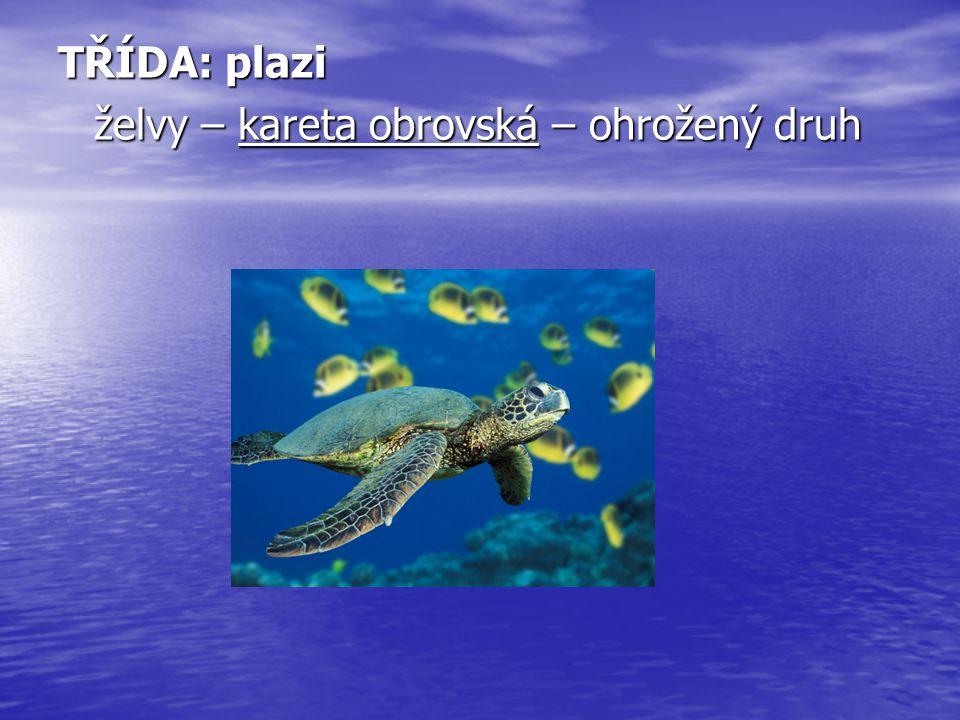 TŘÍDA: plazi želvy – kareta obrovská – ohrožený druh
