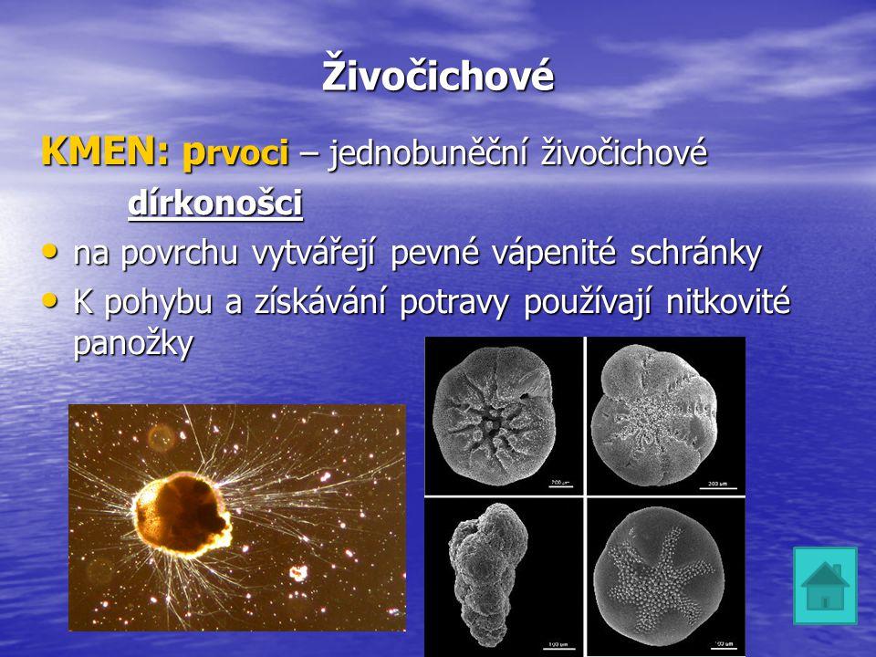 Živočichové KMEN: p rvoci – jednobuněční živočichové dírkonošci na povrchu vytvářejí pevné vápenité schránky na povrchu vytvářejí pevné vápenité schrá
