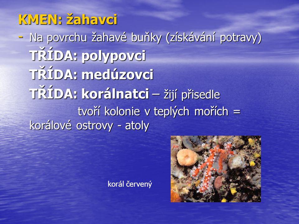 KMEN: žahavci - Na povrchu žahavé buňky (získávání potravy) TŘÍDA: polypovci TŘÍDA: medúzovci TŘÍDA: korálnatci – žijí přisedle tvoří kolonie v teplýc