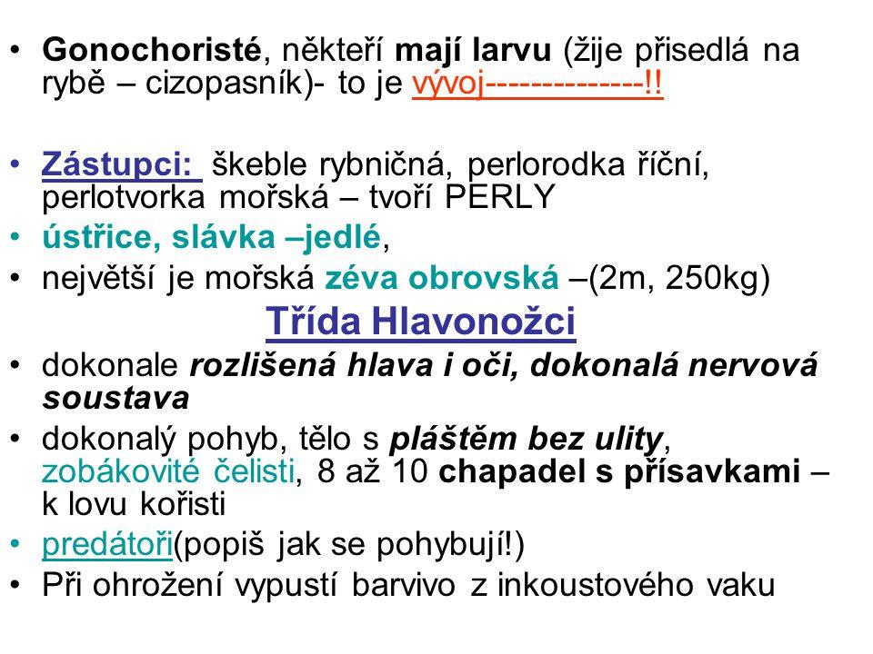 Gonochoristé, někteří mají larvu (žije přisedlá na rybě – cizopasník)- to je vývoj--------------!! Zástupci: škeble rybničná, perlorodka říční, perlot