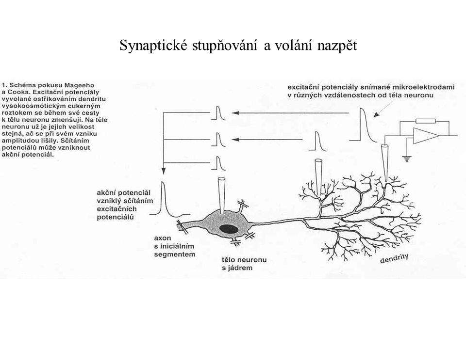Synaptické stupňování a volání nazpět