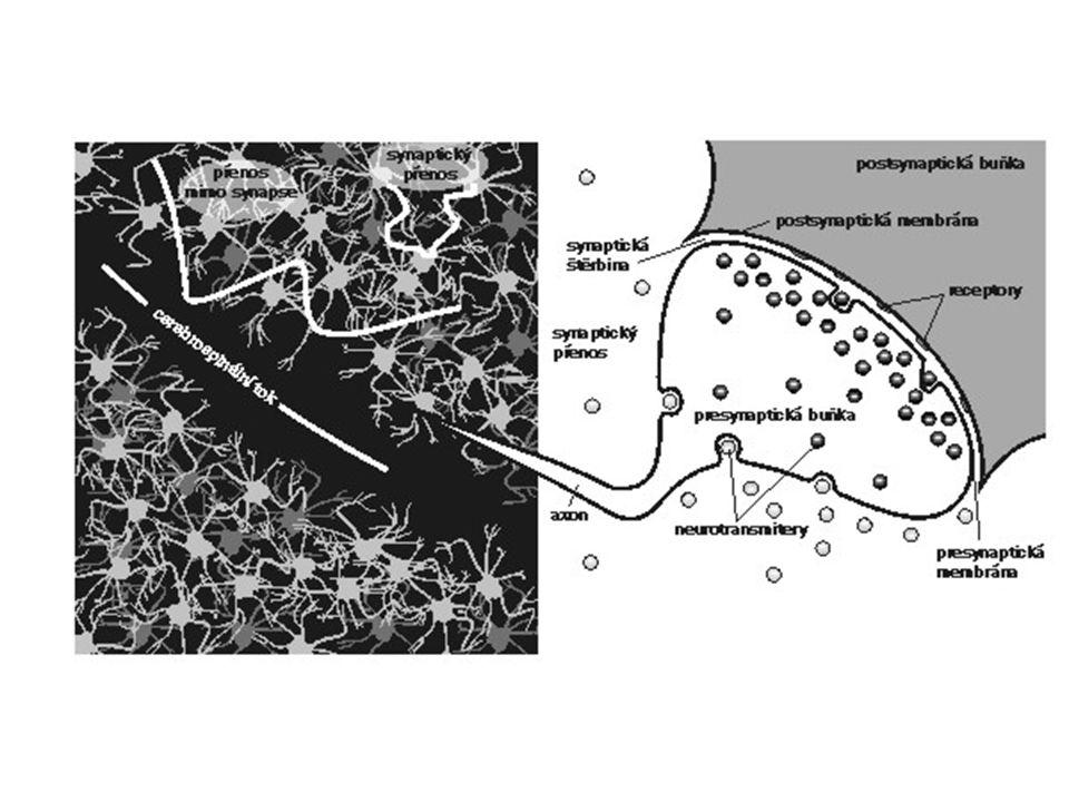 Synaptická plasticita Donald Hebb, 1949 LTP – dlouhodobá potenciace, 1983
