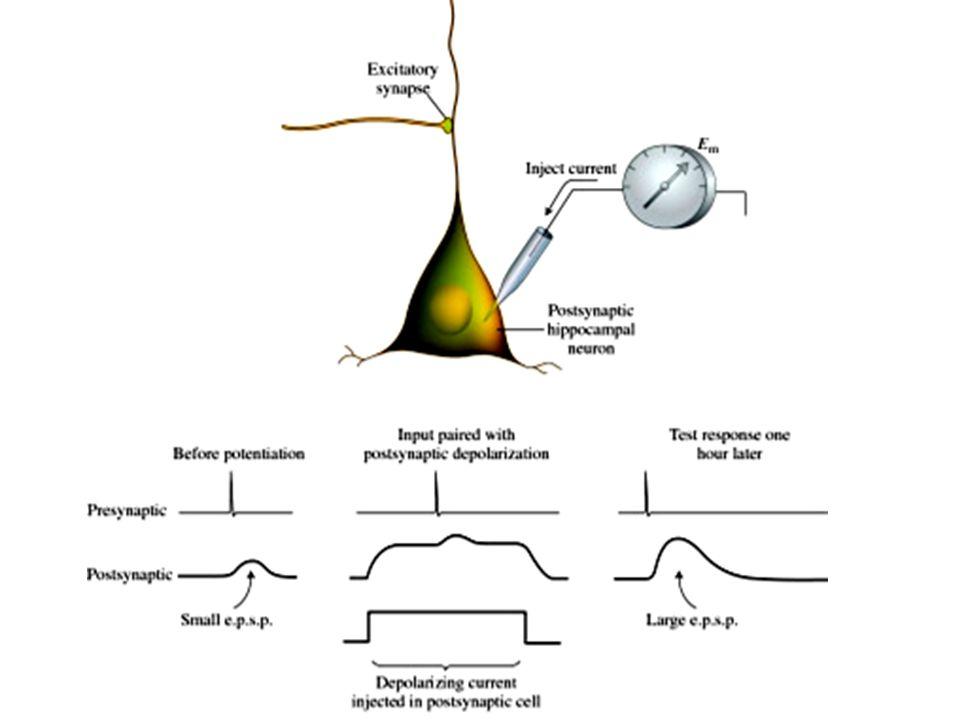 Pomalý přenos: změna metabolismu a stavby.