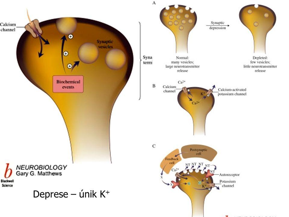 Deprese – únik K +