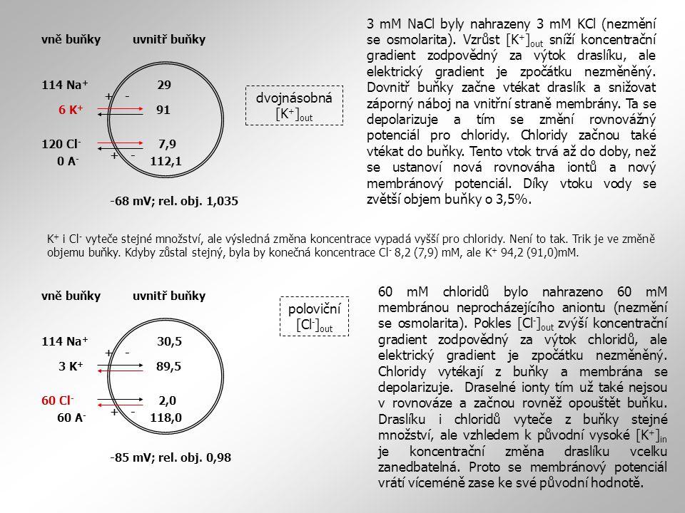 114 Na + 6 K + 120 Cl - 0 A - 29 91 7,9 112,1 +- +- -68 mV; rel. obj. 1,035 vně buňkyuvnitř buňky dvojnásobná [K + ] out 3 mM NaCl byly nahrazeny 3 mM