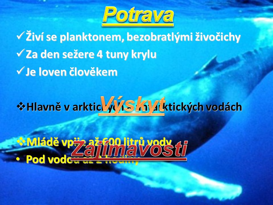 Živí se planktonem, bezobratlými živočichy Živí se planktonem, bezobratlými živočichy Za den sežere 4 tuny krylu Za den sežere 4 tuny krylu Je loven č