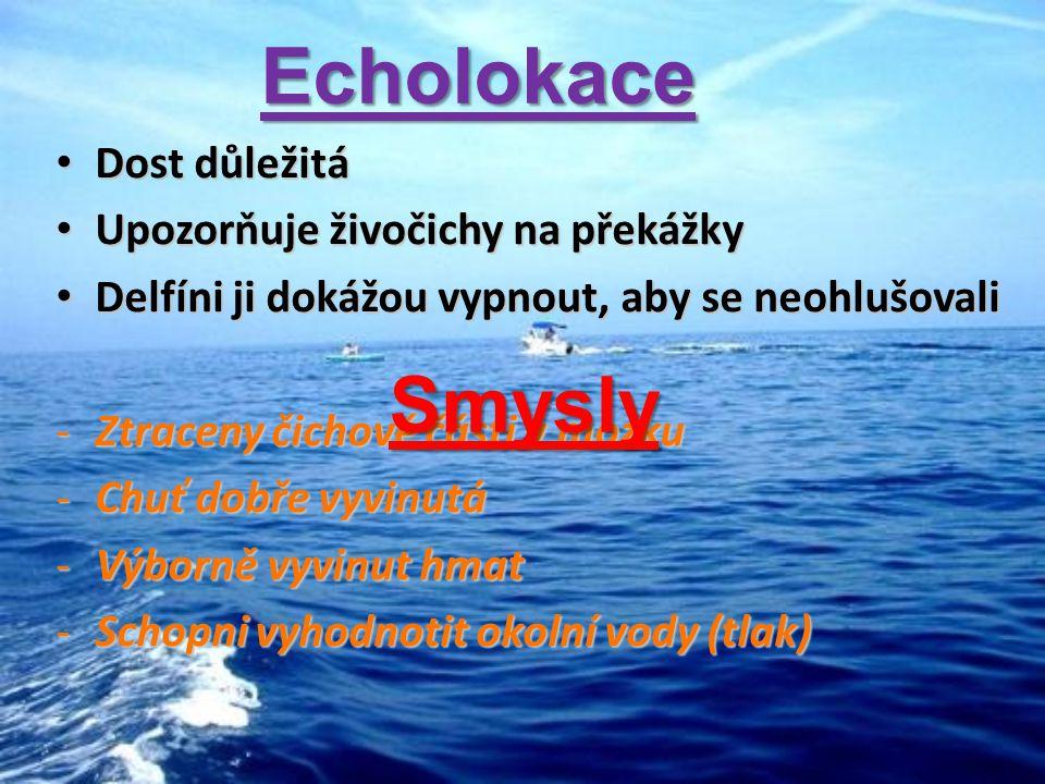 Odkazy: http://cs.wikipedia.org/wiki/Kosatka_dravá http://cs.wikipedia.org/wiki/Kytovci http://cs.wikipedia.org/wiki/Lov_velryb http://www.i-zuby.cz/userimages/Kdy_clovek_sni2.jpg http://nd02.jxs.cz/860/138/d260b67f28_58603494_o2.jpg http://www.21stoleti.cz/view.php?cisloclanku=2007081727 http://img4.rajce.idnes.cz/d0401/1/1257/1257184_bc3cdfa3658790420da9dffc05 80964c/images/kosatka_drava.jpg http://img4.rajce.idnes.cz/d0401/1/1257/1257184_bc3cdfa3658790420da9dffc05 80964c/images/kosatka_drava.jpg http://inpejsci.bloger.cz/obrazky/inpejsci.bloger.cz/plejtvak.jpg http://nicinky.mujblog.centrum.cz/data/66/12816/articleImages/24a2b627f2f944 4d8ca5ab25e16e72ba/thumbnails/detail/articleImage%20(21).jpg http://nicinky.mujblog.centrum.cz/data/66/12816/articleImages/24a2b627f2f944 4d8ca5ab25e16e72ba/thumbnails/detail/articleImage%20(21).jpg http://inpejsci.bloger.cz/obrazky/inpejsci.bloger.cz/delfin-skakavy.jpg http://www.embudu.cz/wp-content/uploads/2008/06/maledivy-more.jpg http://www.fitodar.cz/uploads/images/voda6.jpg http://nd01.jxs.cz/396/791/00ae4a20a6_2124213_o2.jpg