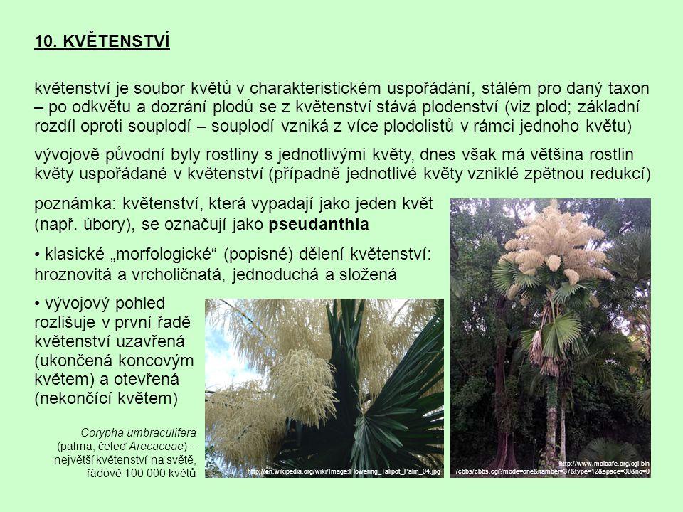10. KVĚTENSTVÍ květenství je soubor květů v charakteristickém uspořádání, stálém pro daný taxon – po odkvětu a dozrání plodů se z květenství stává plo