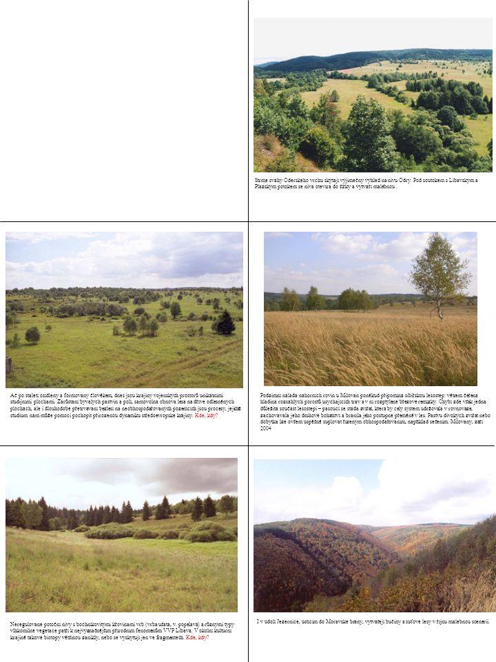 Neregulované potoční nivy s bochníkovitými křovinami vrb (vrba ušatá, v. popelavá) a různými typy vlhkomilné vegetace patří k nejvýznačnějším přírodní