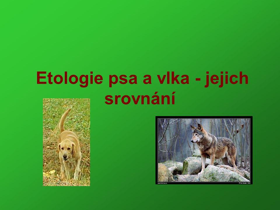 Seznam použité literatury Abrantes, R.Řeč psů-encyklopedie psího chování.