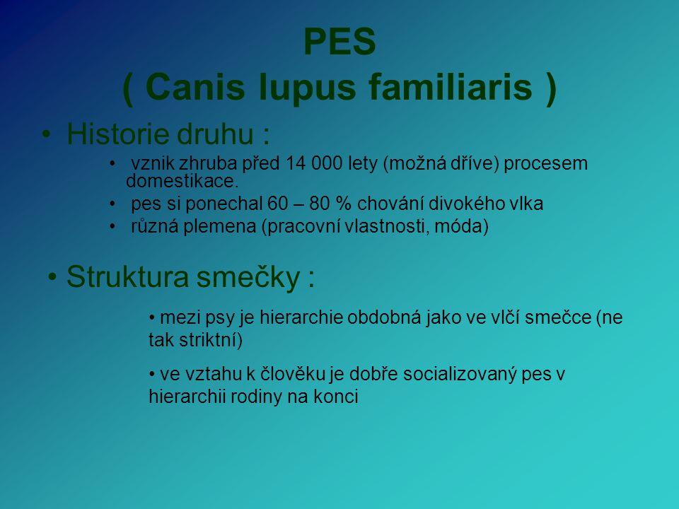 PES ( Canis lupus familiaris ) Historie druhu : vznik zhruba před 14 000 lety (možná dříve) procesem domestikace. pes si ponechal 60 – 80 % chování di