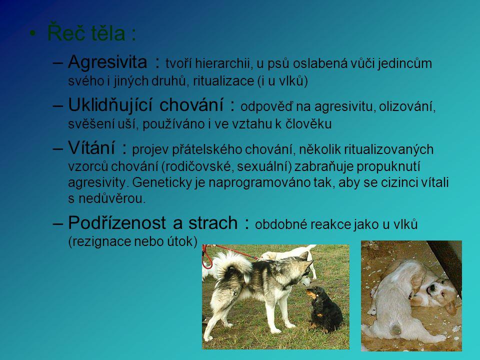 Řeč těla : –Agresivita : tvoří hierarchii, u psů oslabená vůči jedincům svého i jiných druhů, ritualizace (i u vlků) –Uklidňující chování : odpověď na agresivitu, olizování, svěšení uší, používáno i ve vztahu k člověku –Vítání : projev přátelského chování, několik ritualizovaných vzorců chování (rodičovské, sexuální) zabraňuje propuknutí agresivity.