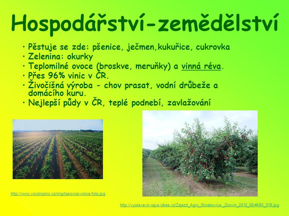 Hospodářství-zemědělství Pěstuje se zde: pšenice, ječmen,kukuřice, cukrovka Zelenina: okurky Teplomilné ovoce (broskve, meruňky) a vinná réva. Přes 96