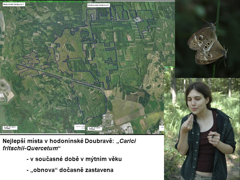 """Nejlepší místa v hodonínské Doubravě: """"Carici fritschii-Quercetum - v současné době v mýtním věku - """"obnova dočasně zastavena"""