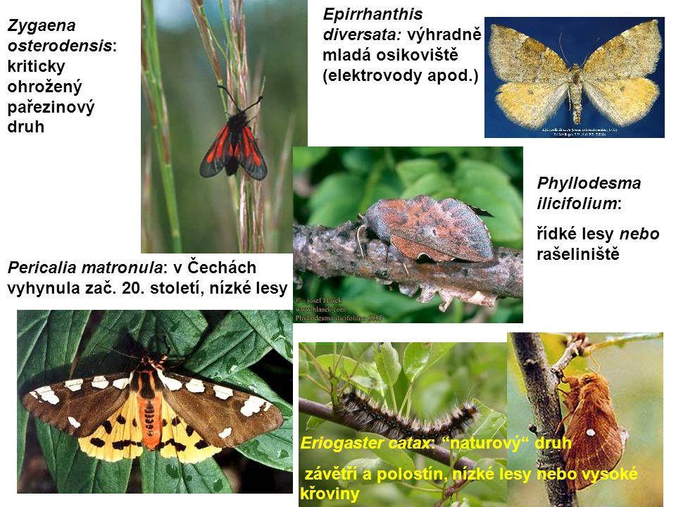 """Zygaena osterodensis: kriticky ohrožený pařezinový druh Eriogaster catax: """"naturový"""" druh závětří a polostín, nízké lesy nebo vysoké křoviny Pericalia"""