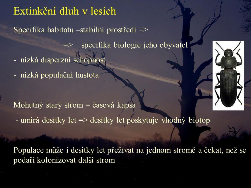 Specifika habitatu –stabilní prostředí => => specifika biologie jeho obyvatel - nízká disperzní schopnost - nízká populační hustota Mohutný starý strom = časová kapsa - umírá desítky let => desítky let poskytuje vhodný biotop Populace může i desítky let přežívat na jednom stromě a čekat, než se podaří kolonizovat další strom Extinkční dluh v lesích