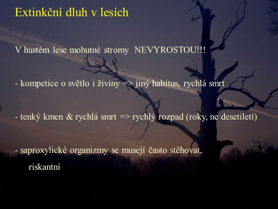 V hustém lese mohutné stromy NEVYROSTOU!!! - kompetice o světlo i živiny => jiný habitus, rychlá smrt - tenký kmen & rychlá smrt => rychlý rozpad (rok