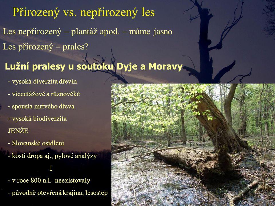 Přirozený vs. nepřirozený les Les nepřirozený – plantáž apod. – máme jasno - vysoká diverzita dřevin - víceetážové a různověké - spousta mrtvého dřeva