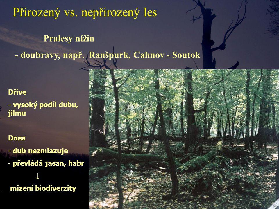Pralesy nížin Dříve - vysoký podíl dubu, jilmu Dnes - dub nezmlazuje - převládá jasan, habr ↓ mizení biodiverzity - doubravy, např.