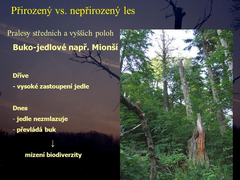 Pralesy středních a vyšších poloh Dříve - vysoké zastoupení jedle Dnes - jedle nezmlazuje - převládá buk ↓ mizení biodiverzity Buko-jedlové např. Mion