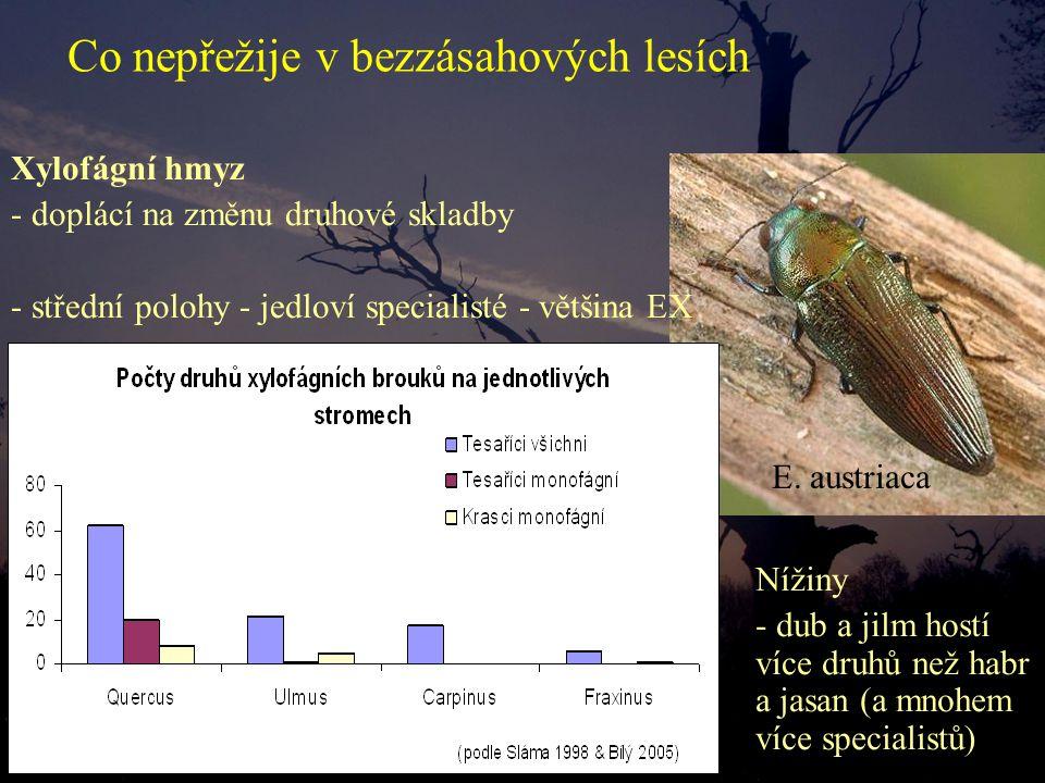 Xylofágní hmyz - doplácí na změnu druhové skladby - střední polohy - jedloví specialisté - většina EX Co nepřežije v bezzásahových lesích Nížiny - dub a jilm hostí více druhů než habr a jasan (a mnohem více specialistů) E.