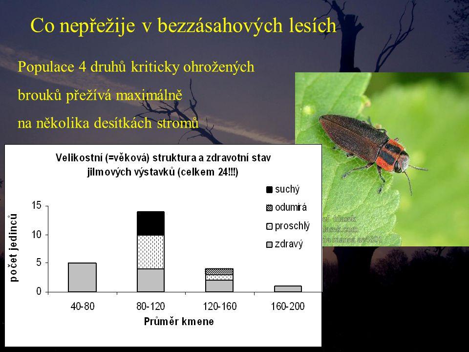 Populace 4 druhů kriticky ohrožených brouků přežívá maximálně na několika desítkách stromů Co nepřežije v bezzásahových lesích