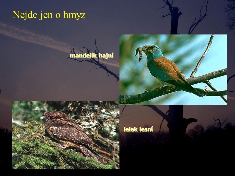 mandelík hajní mandelík hajní lelek lesní lelek lesní Nejde jen o hmyz
