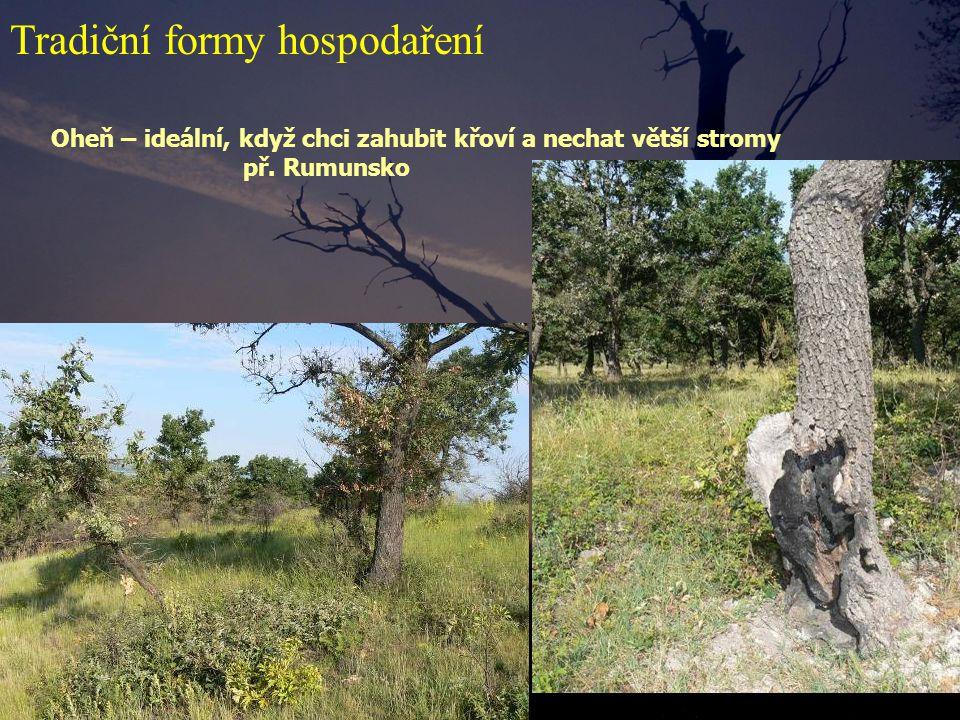 Oheň – ideální, když chci zahubit křoví a nechat větší stromy př. Rumunsko Tradiční formy hospodaření
