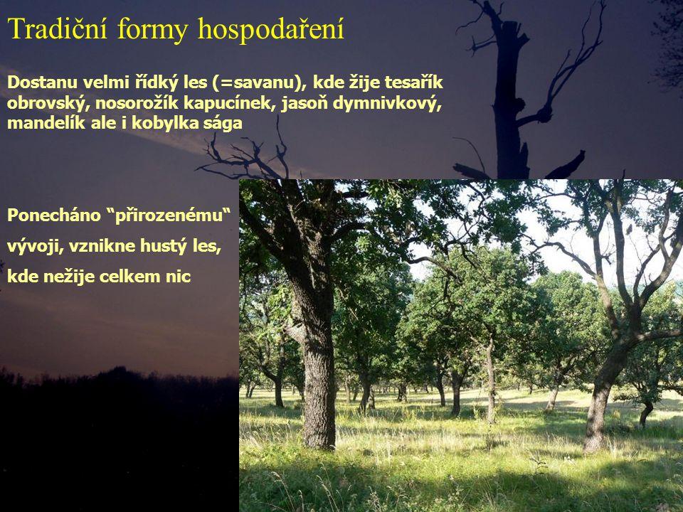 Dostanu velmi řídký les (=savanu), kde žije tesařík obrovský, nosorožík kapucínek, jasoň dymnivkový, mandelík ale i kobylka sága Ponecháno přirozenému vývoji, vznikne hustý les, kde nežije celkem nic Tradiční formy hospodaření