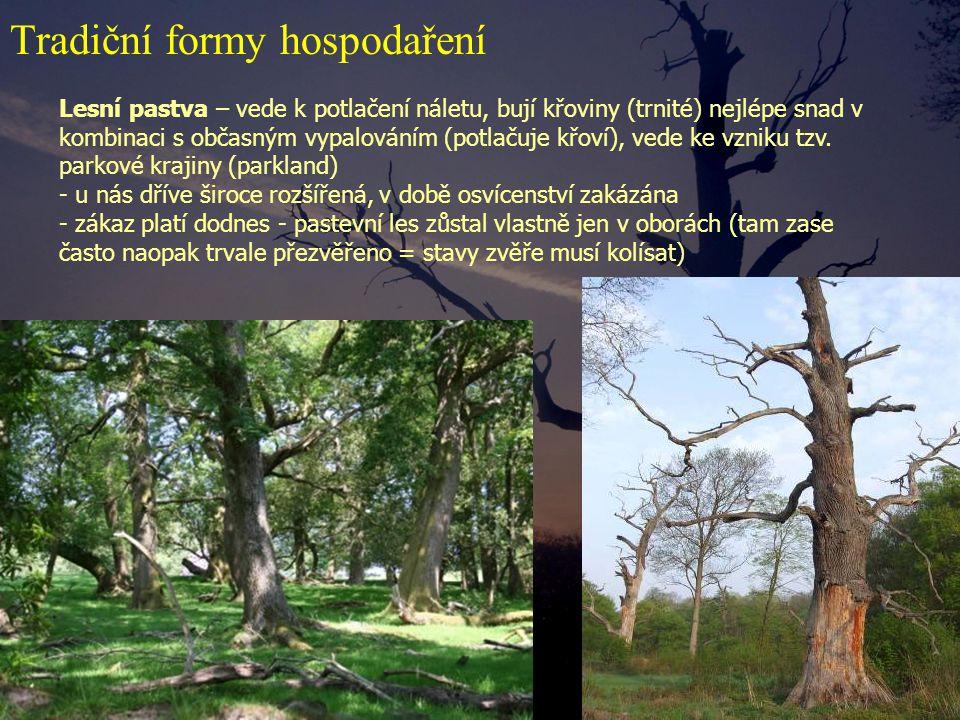 Lesní pastva – vede k potlačení náletu, bují křoviny (trnité) nejlépe snad v kombinaci s občasným vypalováním (potlačuje křoví), vede ke vzniku tzv. p