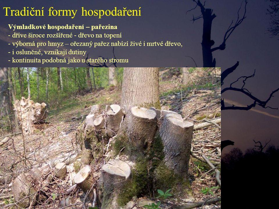 Výmladkové hospodaření – pařezina - dříve široce rozšířené - dřevo na topení - výborná pro hmyz – ořezaný pařez nabízí živé i mrtvé dřevo, - i osluněné, vznikají dutiny - kontinuita podobná jako u starého stromu Tradiční formy hospodaření