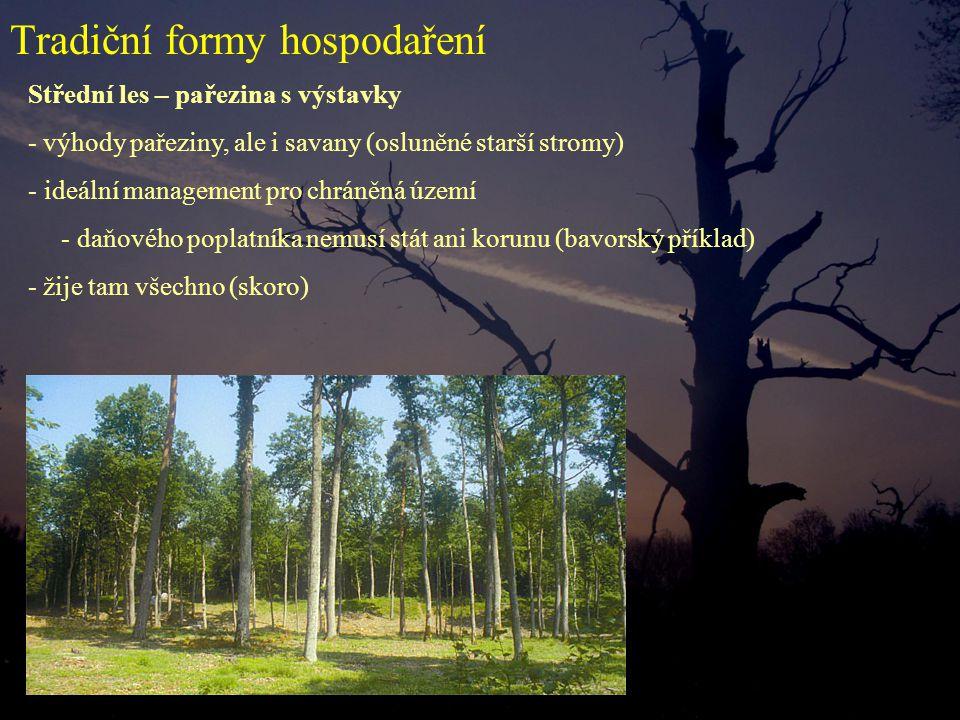 Střední les – pařezina s výstavky - výhody pařeziny, ale i savany (osluněné starší stromy) - ideální management pro chráněná území - daňového poplatníka nemusí stát ani korunu (bavorský příklad) - žije tam všechno (skoro) Tradiční formy hospodaření