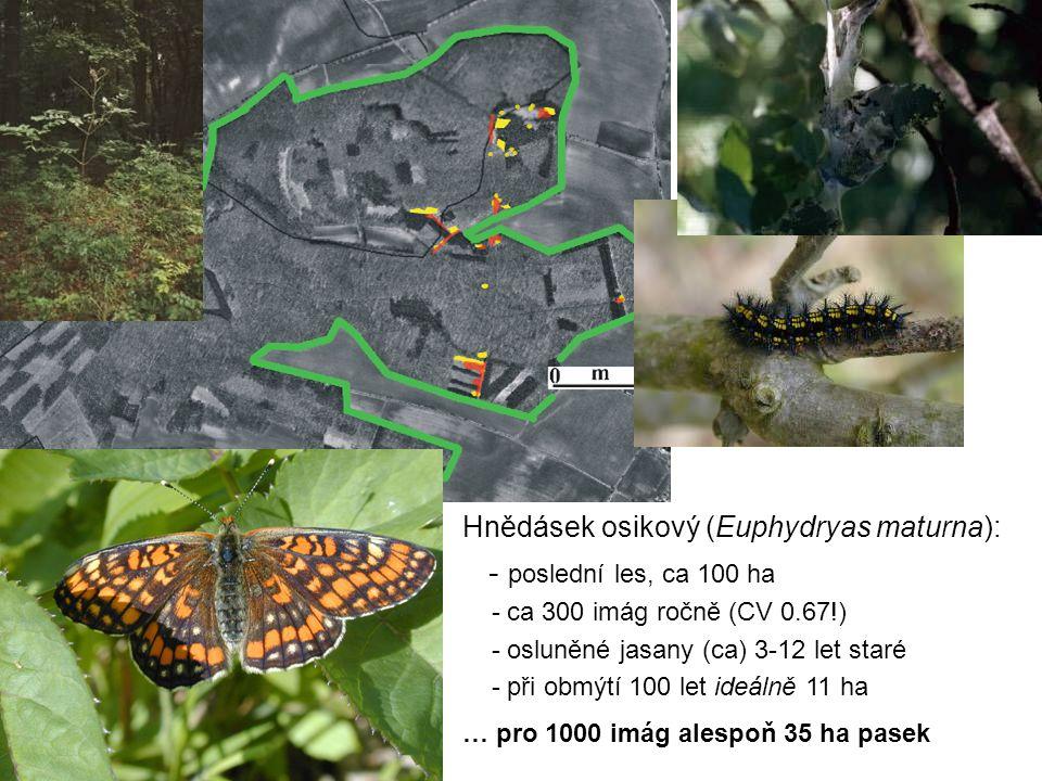 Hnědásek osikový (Euphydryas maturna): - poslední les, ca 100 ha - ca 300 imág ročně (CV 0.67!) - osluněné jasany (ca) 3-12 let staré - při obmýtí 100 let ideálně 11 ha … pro 1000 imág alespoň 35 ha pasek
