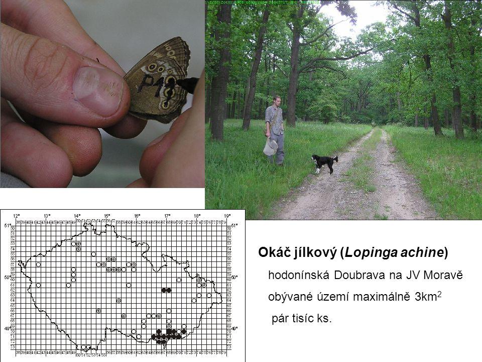 Okáč jílkový (Lopinga achine) hodonínská Doubrava na JV Moravě obývané území maximálně 3km 2 pár tisíc ks.