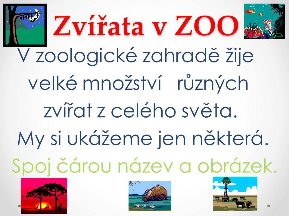 Zvířata v ZOO V zoologické zahradě žije velké množství různých zvířat z celého světa.