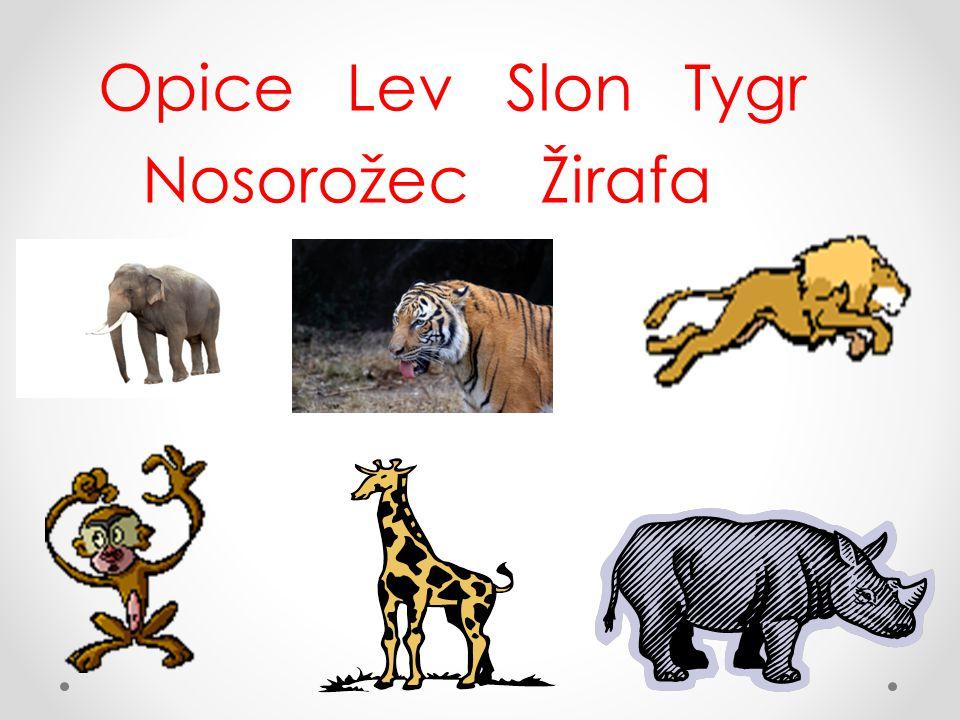 Správné odpovědi: Slon Tygr Lev Opice Nosorožec Žirafa