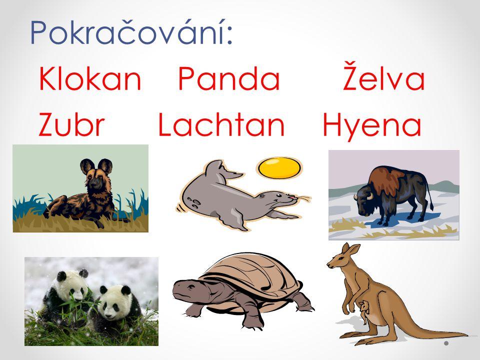 Pokračování: Klokan Panda Želva Zubr Lachtan Hyena