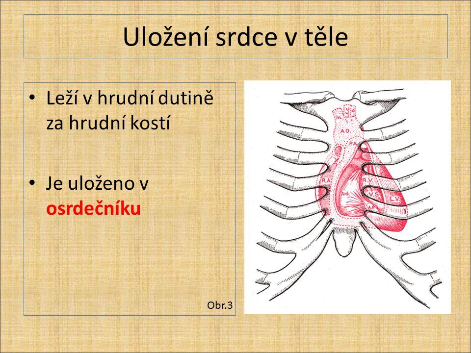 Uložení srdce v těle Leží v hrudní dutině za hrudní kostí Je uloženo v osrdečníku Obr.3