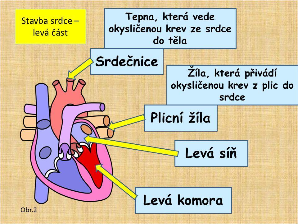 Srdeční chlopně – zabraňují zpětnému toku krve Obr.2 Trojcípá chlopeň Dvojcípá chlopeň Je mezi pravou síní a pravou komorou Je mezi levou síní a levou komorou 2 poloměsíčité chlopně Jsou na začátku srdečnice a plicnice