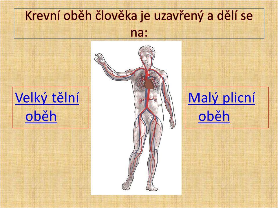 Velký tělní oběh Z levé komory aorta vede okysličenou krev ze srdce do těla předává se kyslík a odkysličená krev se vrací horní a dolní dutou žílou do pravé síně.