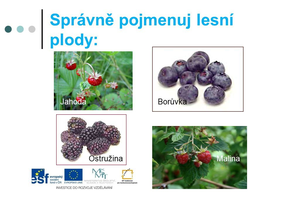 Správně pojmenuj lesní plody: Jahoda Borůvka OstružinaMalina
