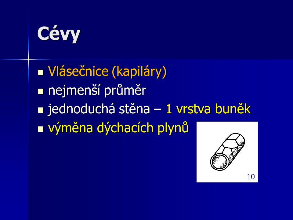 Cévy Vlásečnice (kapiláry) Vlásečnice (kapiláry) nejmenší průměr nejmenší průměr jednoduchá stěna – 1 vrstva buněk jednoduchá stěna – 1 vrstva buněk v