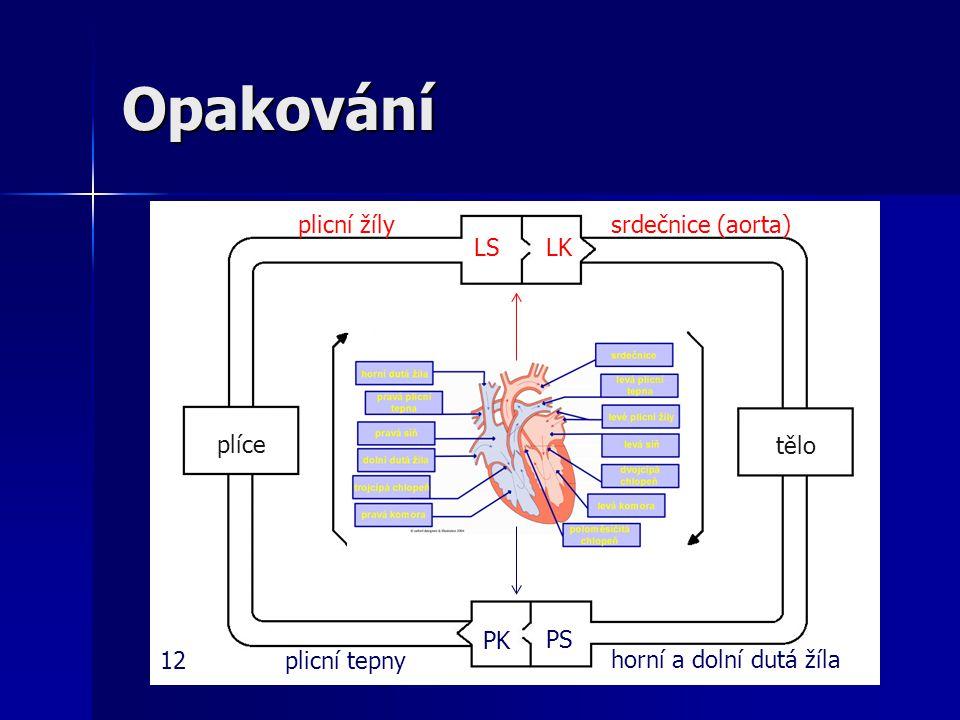 Opakování srdečnice (aorta) tělo horní a dolní dutá žíla LSLK PS PK plicní tepny plicní žíly plíce 12
