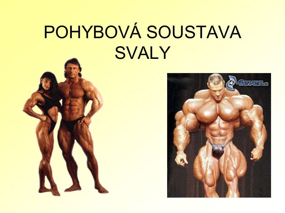 DÚ : 1.U dospělého člověka tvoří svalstvo průměrně 40% celkové tělesné hmotnosti.