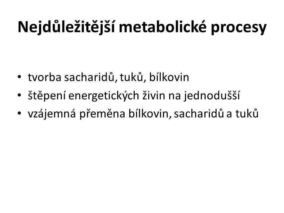 Nejdůležitější metabolické procesy tvorba sacharidů, tuků, bílkovin štěpení energetických živin na jednodušší vzájemná přeměna bílkovin, sacharidů a tuků