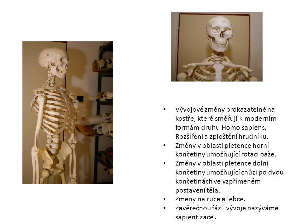 Vývojové změny prokazatelné na kostře, které směřují k moderním formám druhu Homo sapiens.