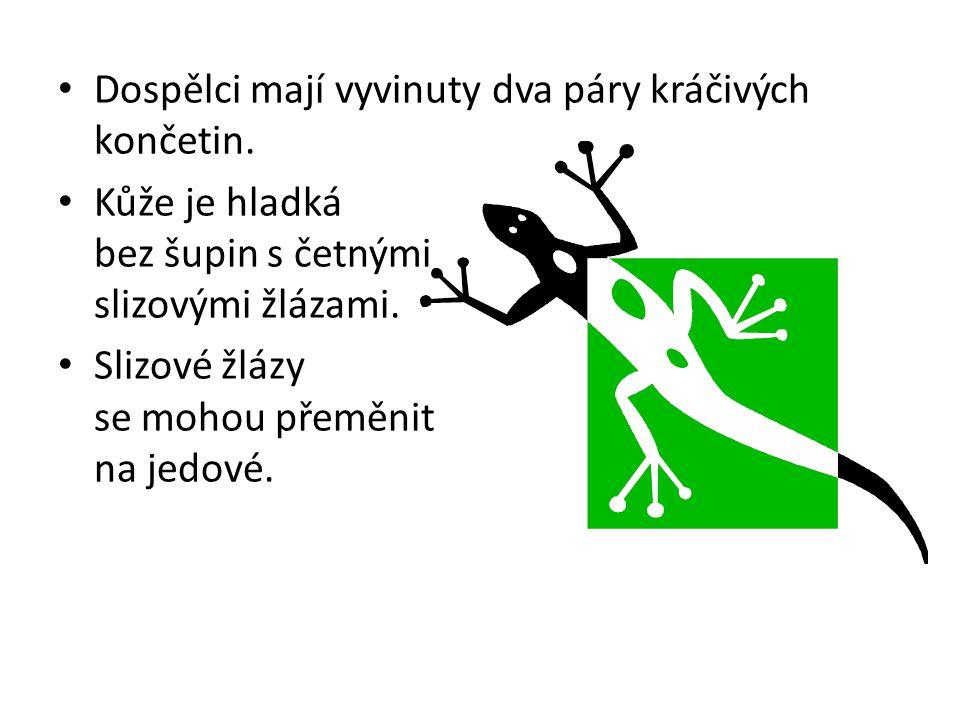 Vnitřní stavba těla http://media.photobucket.com/image/frog%20anatomy/mars40/frogs/anatomy-male-frog.jpg?o=8 (12.