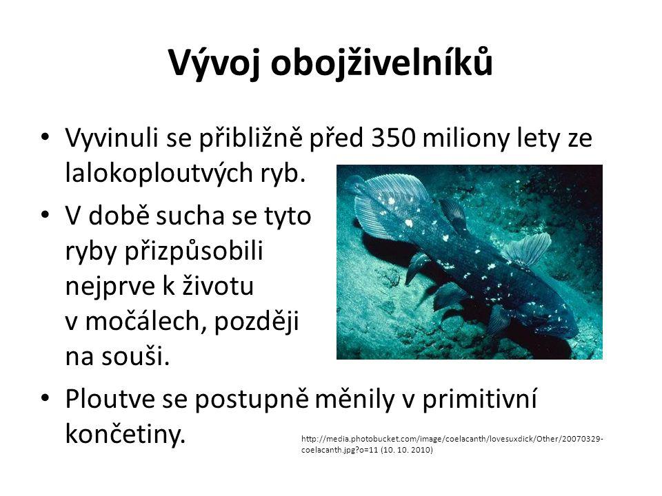 Vývoj obojživelníků Vyvinuli se přibližně před 350 miliony lety ze lalokoploutvých ryb. V době sucha se tyto ryby přizpůsobili nejprve k životu v močá