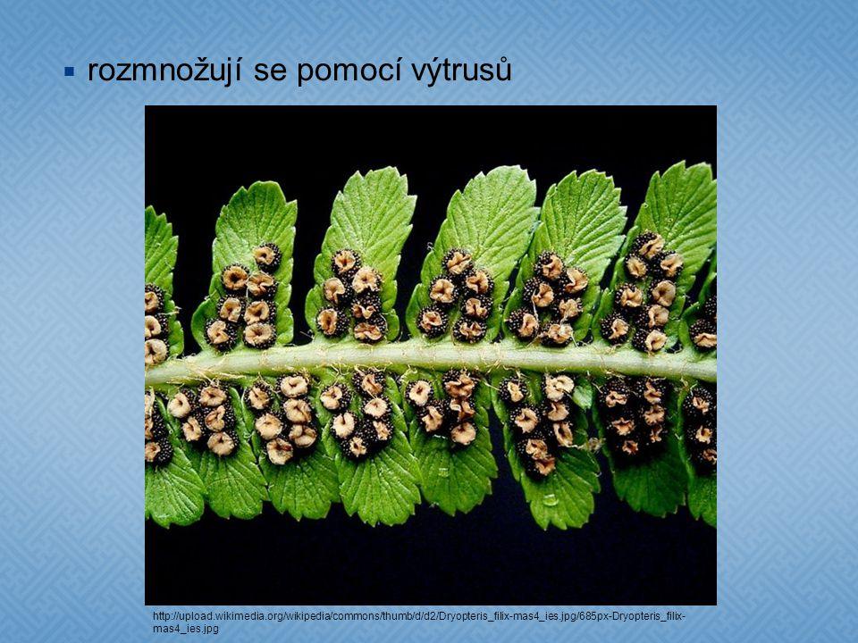  rozmnožují se pomocí výtrusů http://upload.wikimedia.org/wikipedia/commons/thumb/d/d2/Dryopteris_filix-mas4_ies.jpg/685px-Dryopteris_filix- mas4_ies