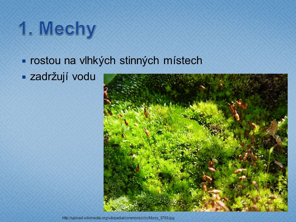  rostou ve vlhkých stinných lesích http://upload.wikimedia.org/wikipedia/commons/thu mb/1/1d/Lycopodium_clavatum_151207.jpg/530px -Lycopodium_clavatum_151207.jpg